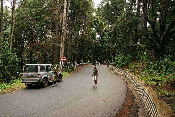 Road trip from Bangalore to Ooty via Bandipur Forest