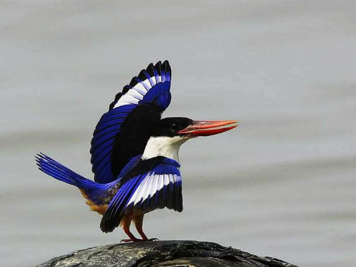 Salim Ali Bird Sanctuary is an offbeat tourist places to visit while in Goa