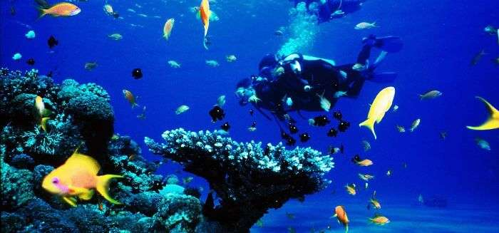 Go scuba diving in Tarkarli and witness the exquisite marine life