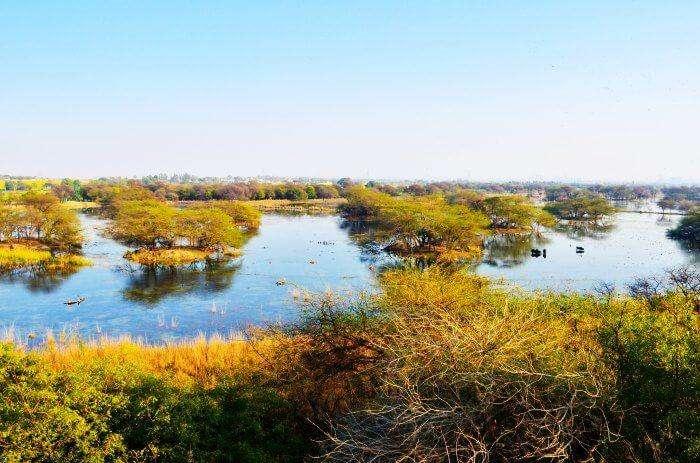 Wetland of Sultanpur Bird Sanctuary in Haryana