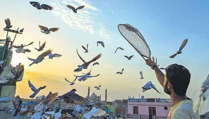 kabootarbazi in Old Delhi