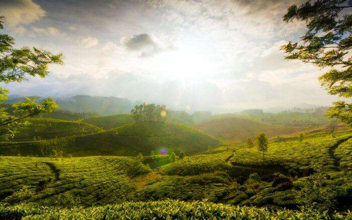 The sun shines brightly over the beautiful tea garden hill of minnar
