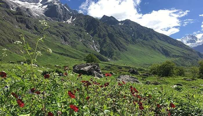 valley of flowers uttarakhand
