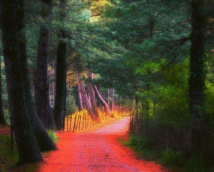 Beautiful leaves add colors to the route to the Forest Training School in Bandipore
