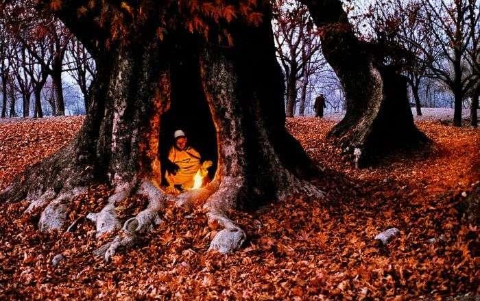 A local tries to keep himself warm inside a maple grove during autumn in Srinagar