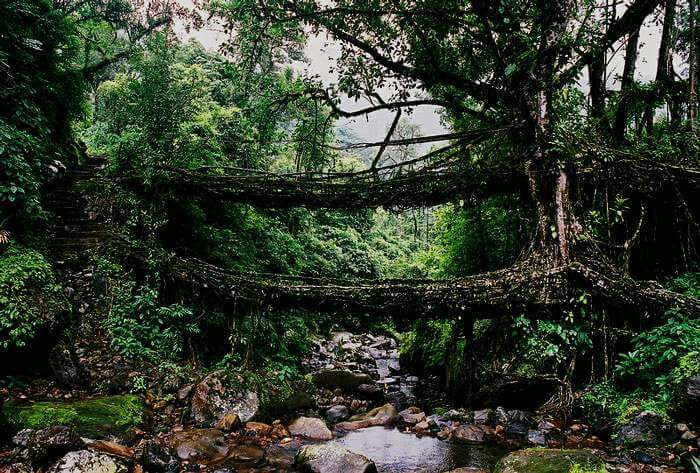 Living root bridges in Cherrapunji, about an hour from Shillong