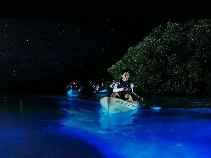 Kayaks enjoying bioluminescence at Puerto Mosquito - one of the most beautiful bioluminescent bays in the world