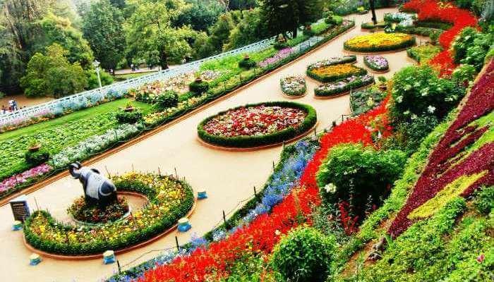 Rose Garden In Chandigarh_23rd oct