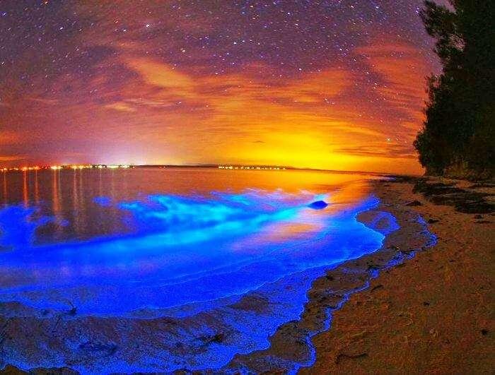 Stunning view of bioluminescent beach at San Juan Island in Washington