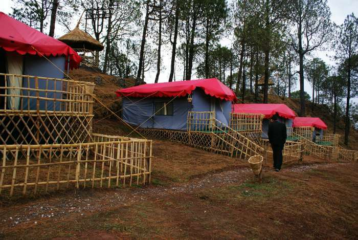 Eco tents at Sanawar Nature Camp in Kasauli