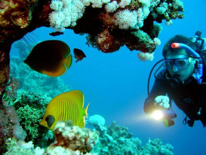 A diver explores the underwater corals and exquisite marine life while scuba diving in Bali.