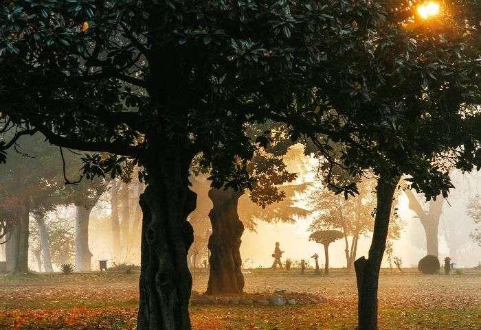 The sun shines through the trees during the autumn season in Srinagar