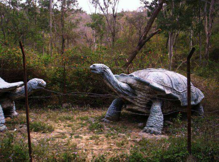 Shivalik Fossil Park Museum in Sirmour of Himachal – One the best museums in India