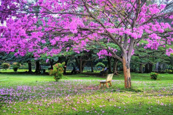 Spring in the garden city of India - Bangalore