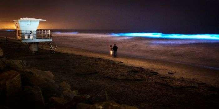 A couple enjoying bioluminescence at Torrey Pines State Beach