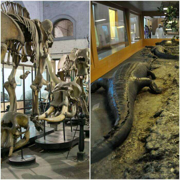 Various fossils and sculptures of various animals, extinct and otherwise in Indian Museum