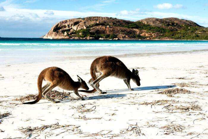 White Sand Hyams Beach in Australia