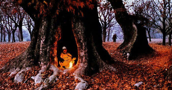 a guy burning fire inside a hollow of a tree