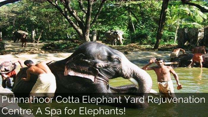 spas for elephant