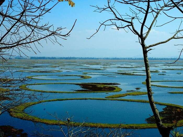 Loktak Lake is a naturally occurring floating lake