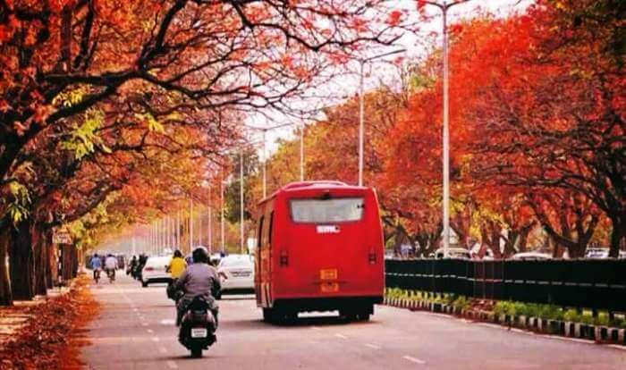 Spring time in Chandigarh