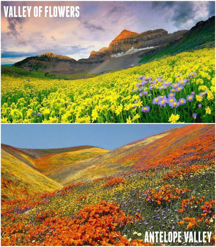 valley of flowers and antelope valley