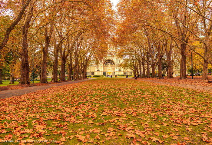 Autumn in the Carlton Gardens