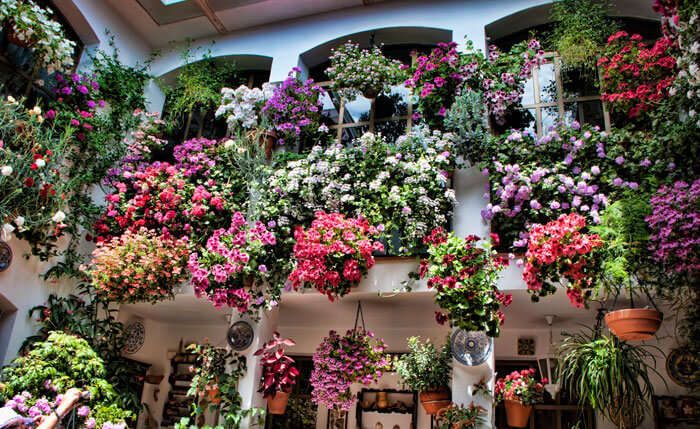 A flowery courtyard in the Cordoba