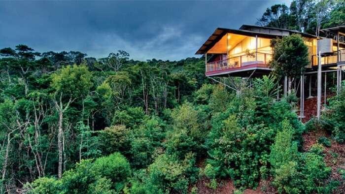 The O'Reilly's Rainforest retreat amongst the dense green
