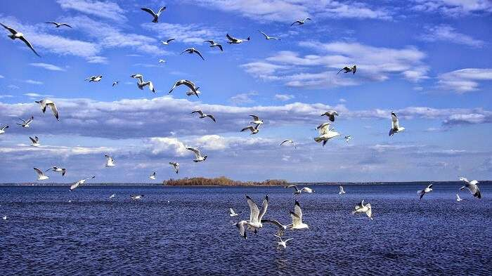 Birds flying over Pulicat Lake