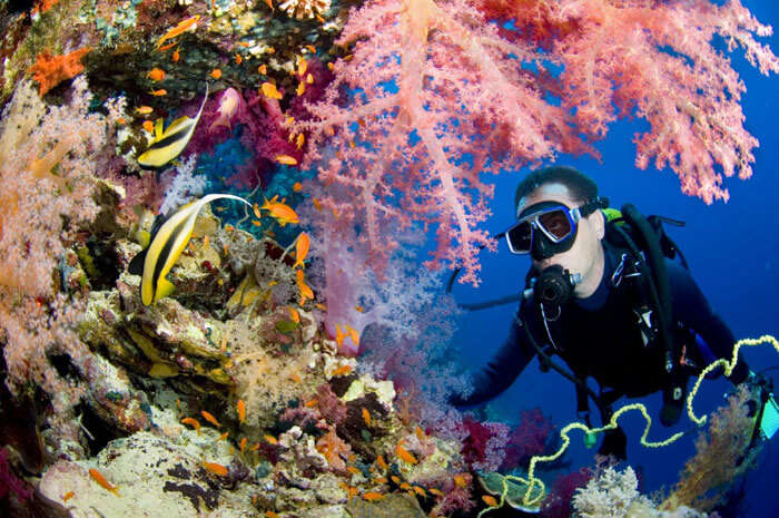 Colorful underwaters in Andaman