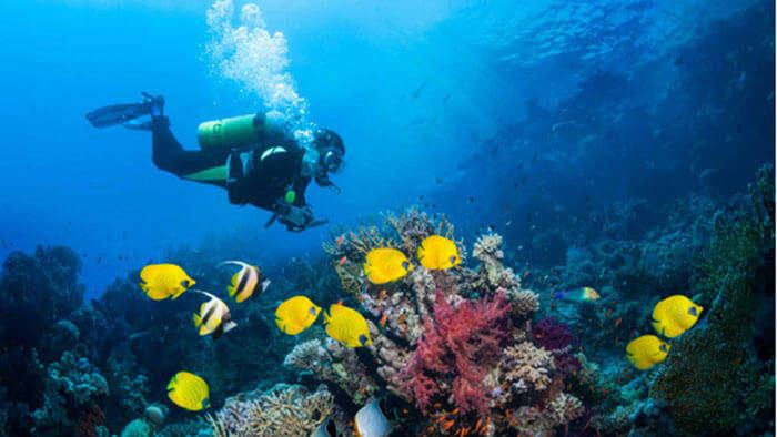 Scuba Diving in exquisite Goa