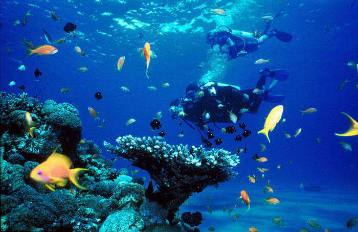 Scuba Diving in pristine Pondicherry