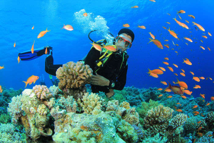 Scuba diving in coral Trakali