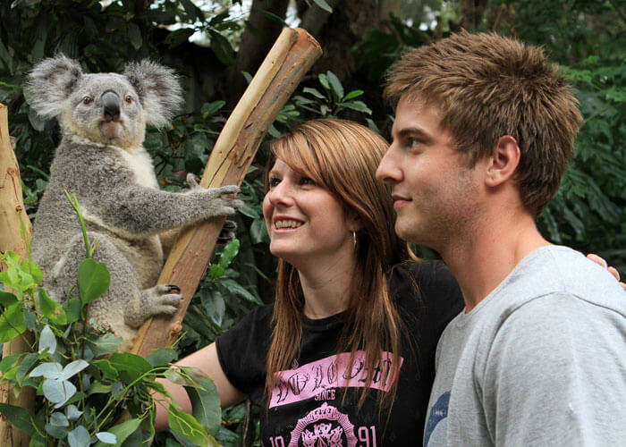 Face-to-face encounters with Koalas at Featherdale Wildlife Park