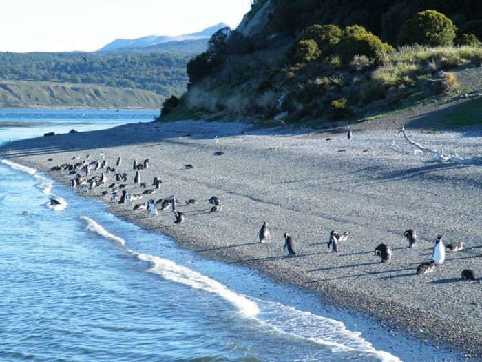 Tourists can watch little penguins at close quarters at Penguin Island