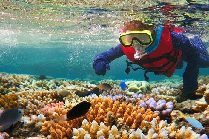 Snorkeling in the Great Barrier Reef of Queensland in Australia