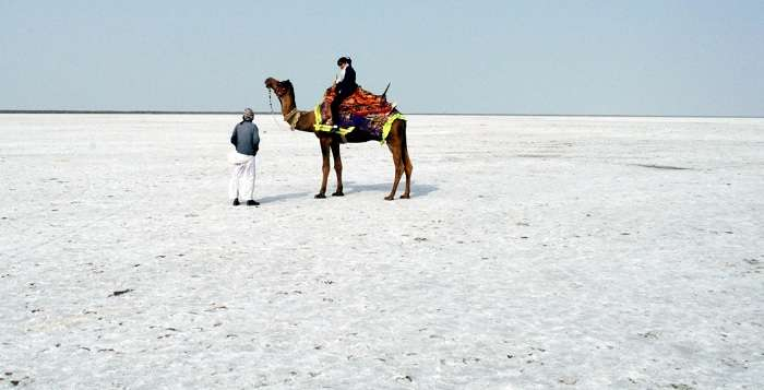 A camel ride on the white desert at Rann of Kutch