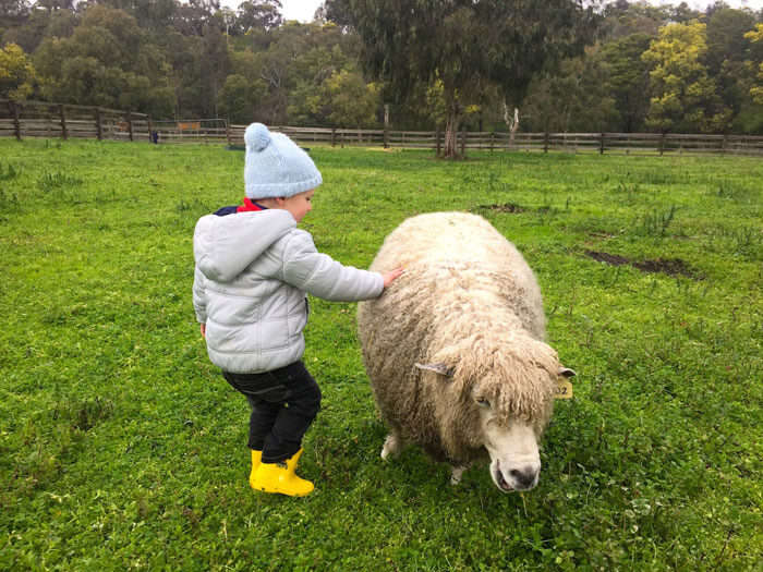 A kid petting a sheep at Collingwood Children's Farm – one of the fun things to do in Melbourne