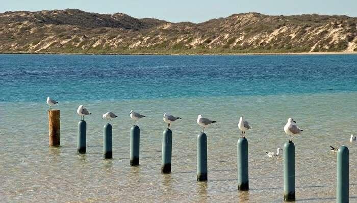 Coral Bay Australia