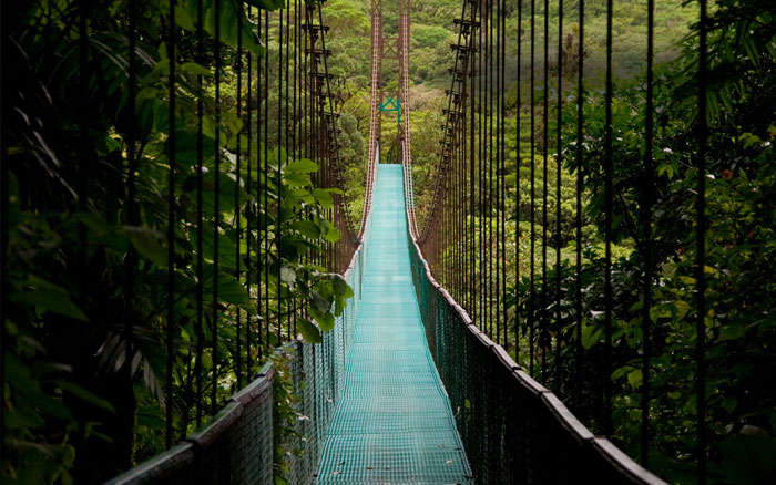 The Treetop Walkway of Costa Rica lets you experience the exquisite flora and exotic bird life.