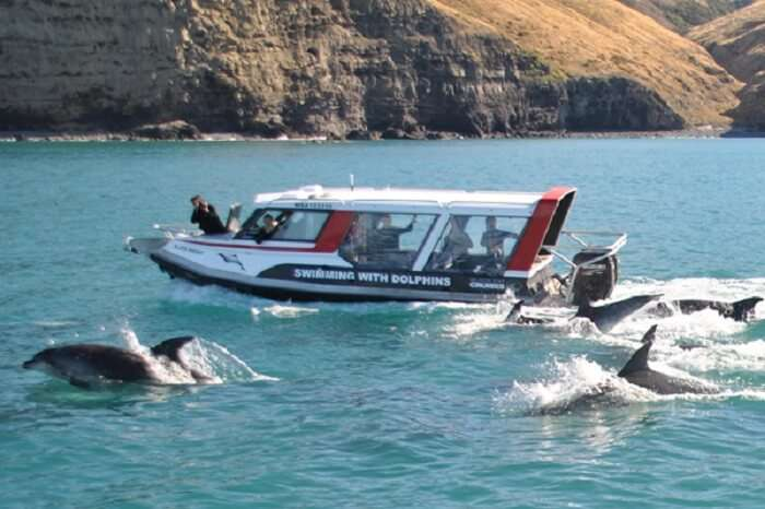 Dolphin watching in New Zealand is one of the best fun activities to indulge into