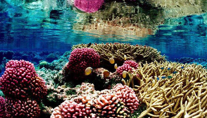 Great-Barrier-Reef-in-Australia_24th oct