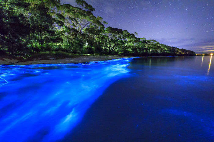 The bioluminescent Mosquito bay is the most popular and best beach in New Zealand
