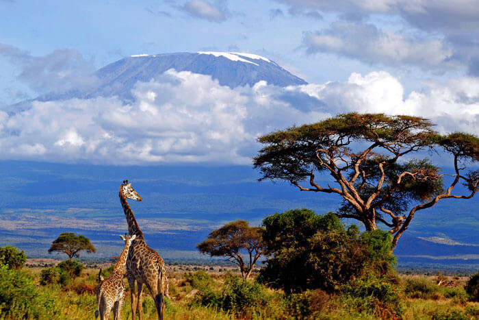 Snow-capped Mount Kilimanjaro in Africa