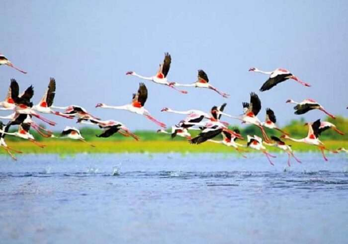 Birds flying over Nalsarovar