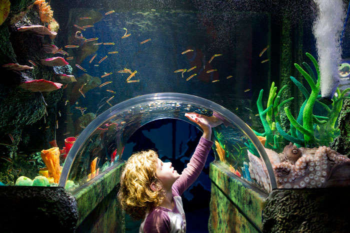 A child enjoying at Sea Life Melbourne Aquarium – one of the fun places in Melbourne