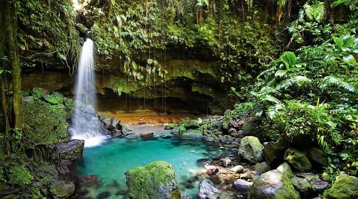 The pristine Emerald Pool, a waterfall-fed oasis in Dominica.