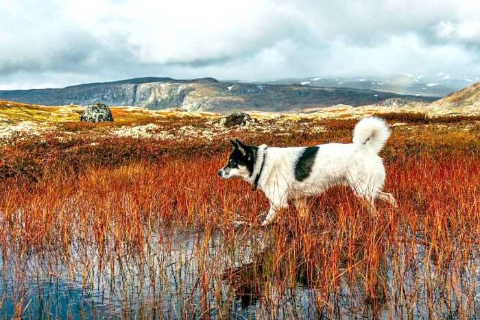 Dog walking on the red