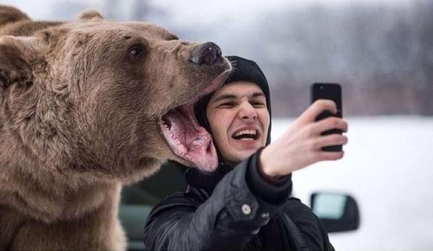 Bear selfies are banned at Lake Tahoe in California
